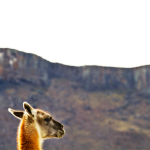 maguanaco_PNG_1024x0