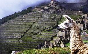 viaggi_responsabili_in_Peru_-_peruresponsabile_it_-__machu_picchu_-_lama