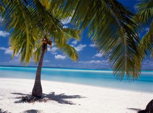 palme-mare-spiaggia-isole-cook