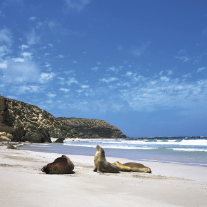 kangaroo-island-parco-naturale-foche-photo-satc-medium