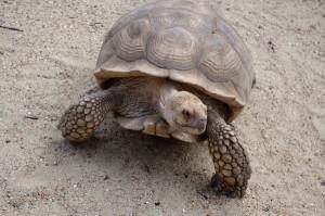 tartaruga-biotropica-francia