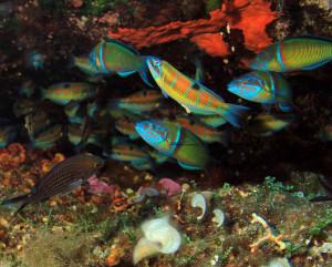mare-pesci-ventotene-medium