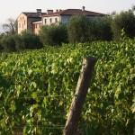 vigneti-week-end-di-degustazioni-vino-biologico-300