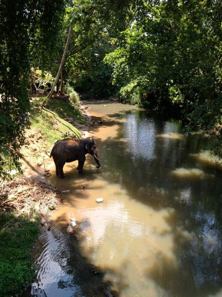 viaggiare-in-sri-lanka-Elefante-600