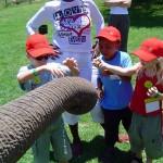 Viaggio-in-sudafrica-con-bambini-elephant-300