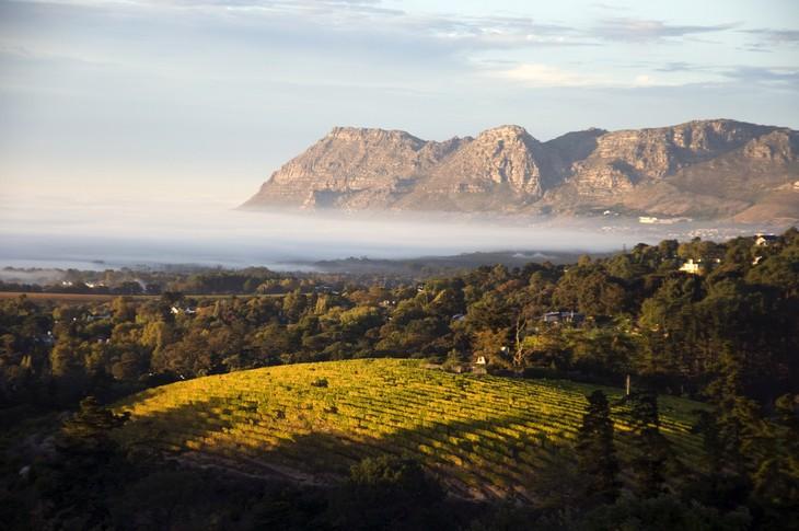 terre del vino sudafrica