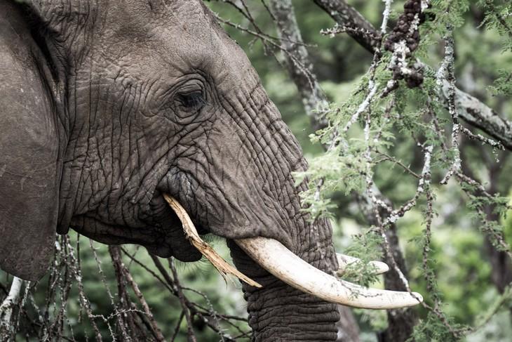 tn_kenya-elefante-foto