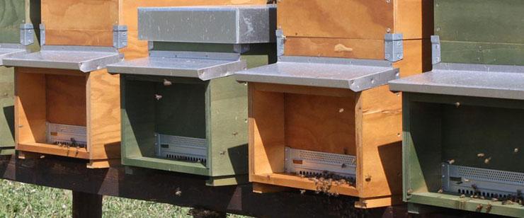 fattoria-la-maliosa-toscana-miele-700