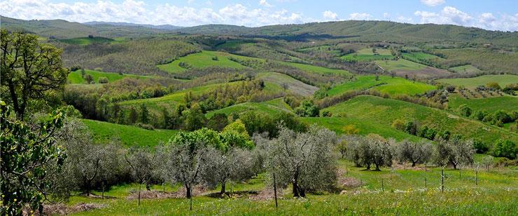 fattoria-la-maliosa-toscana-uliveti-storici-300