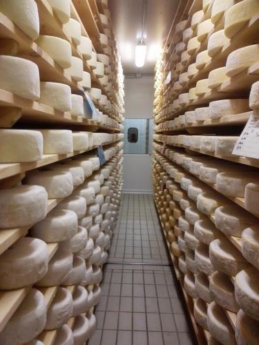 Stagionatura dei formaggi alla Latteria Perenzin - ph Elena Bianco