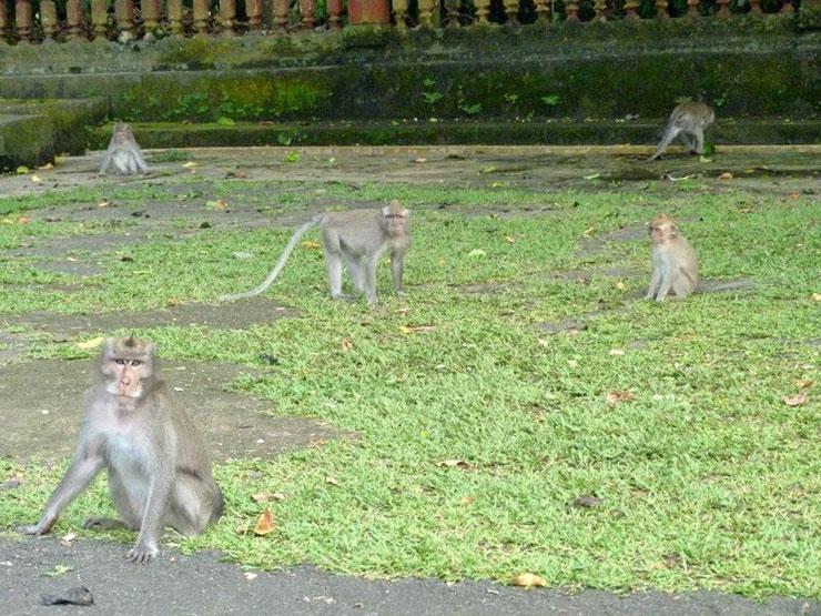 foresta-delle-scimmie-a-bali-700