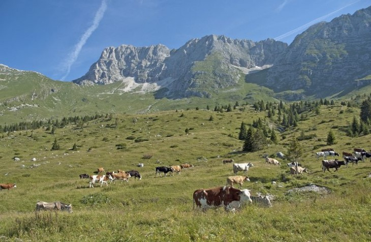 Pordenone natura e montagne