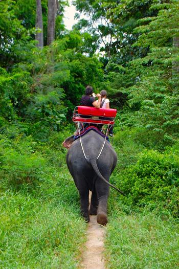 passeggiata-elefante-350