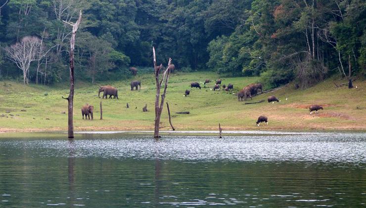riserva-di-animali-sul-lago-periyar-india-in-sedia-a-rotelle-700