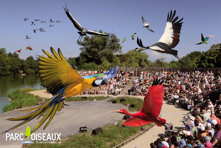 in-francia-con-i-bambini-Spectacle-Parc-des-oiseaux_credit-parc-des-oiseaux-700