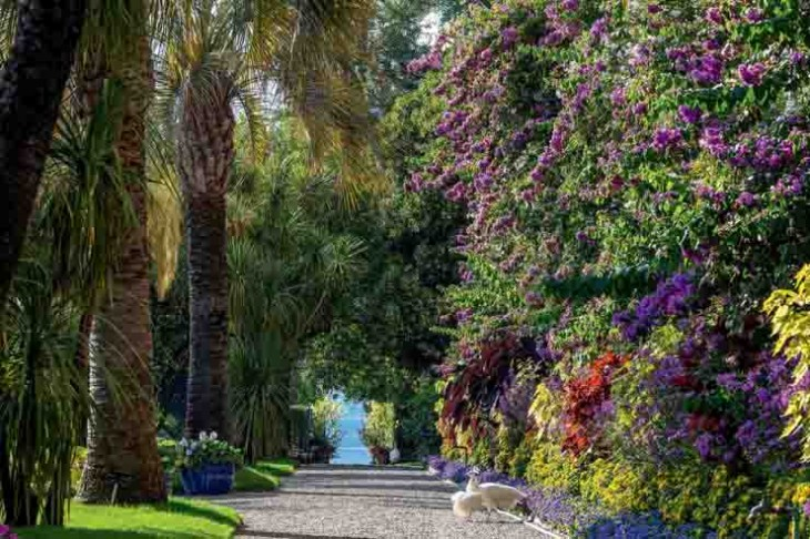 02. I Giardini delle Isole Borromee, Isola Madre, Viale delle Palme, foto di Dario Fusaro_a