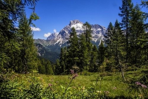 Il Cimon della Pala dall'Alpe Tognola