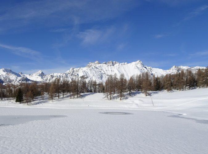 Chamois in inverno