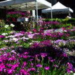 """""""Flora et Decora"""", appuntamento in autunno con il meglio del settore green"""