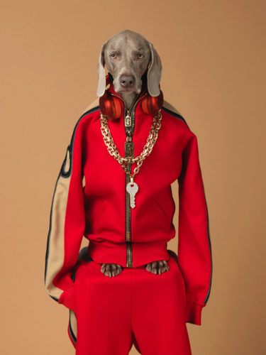 LUGANO, MASI: IN MOSTRA L'ARTE DEL FOTOGRAFO WILLIAM WEGMAN