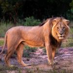 Un inverno al caldo in Sudafrica: ecco quattro luoghi inaspettati da scoprire