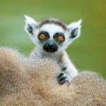 Appuntamento virtuale per i più piccoli, nello zoo più antico del mondo