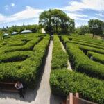 Vienna, la metropoli più green, riparte dopo il Coronavirus: arte, cultura, equitazione e parchi da non perdere