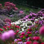 Riparte l'Oasi Zegna, appuntamento nella Conca dei Rododendri