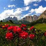 """La decima edizione de """"Il Miele del Sindaco"""" porta sul podio il miele di rododendro"""