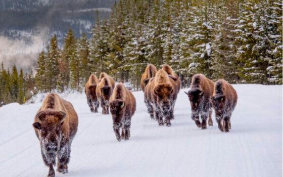 Alla scoperta dei grandi parchi americani, con i ranger del National Park Service