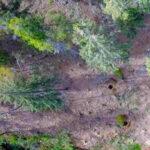 Sabato 21 novembre ricorre la Giornata nazionale degli alberi