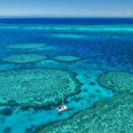 Il più grande spettacolo riproduttivo al mondo, la nuova vita dei coralli nella Grande Barriera Corallina