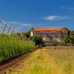 Repubblica Ceca: Zatec candidata da Oscar per un altro riconoscimento UNESCO