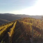 News from wine tourism: The Georgian EnoTourism Association and Caucasus International University join the Global Wine Tourism Organization