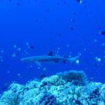 Filippine, le 5 attività acquatiche da non perdere